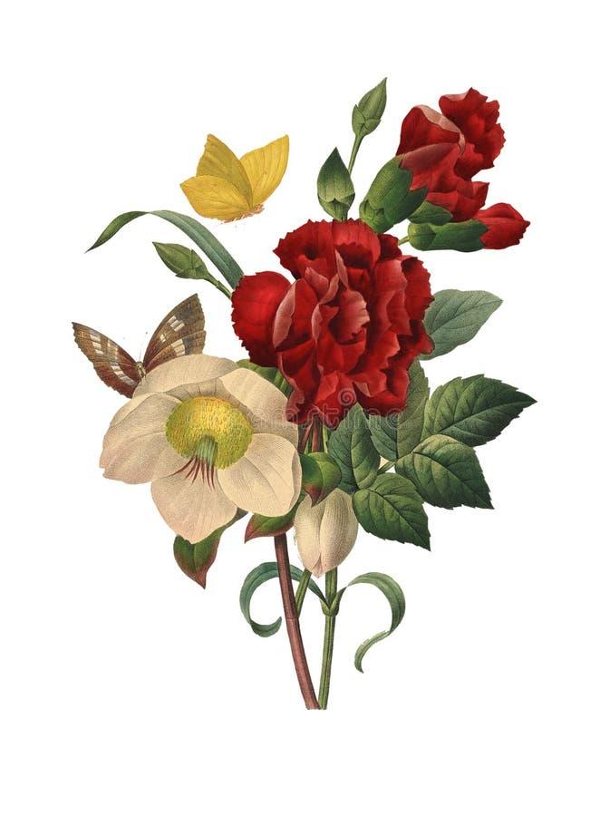 De Illustratie van de Helleborebloem vector illustratie
