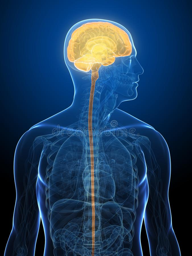 De illustratie van hersenen royalty-vrije illustratie