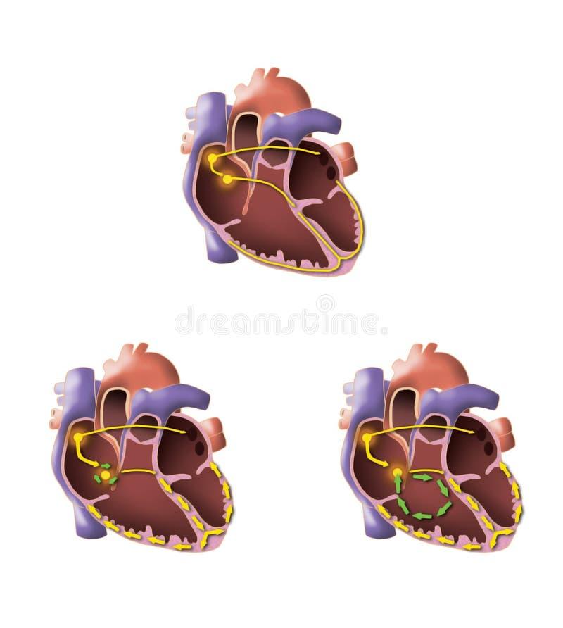 De illustratie van het hart vector illustratie