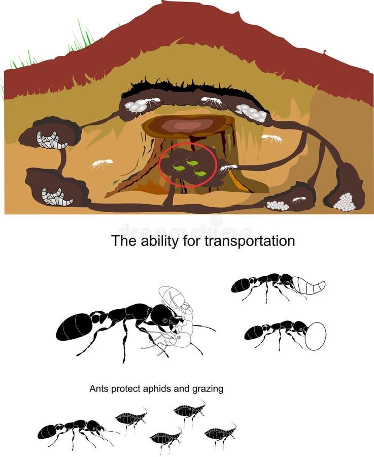 De illustratie van het mierenleven op wit wordt geïsoleerd dat vector illustratie