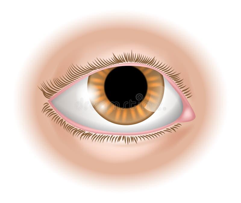 De illustratie van het ooglichaamsdeel royalty-vrije illustratie