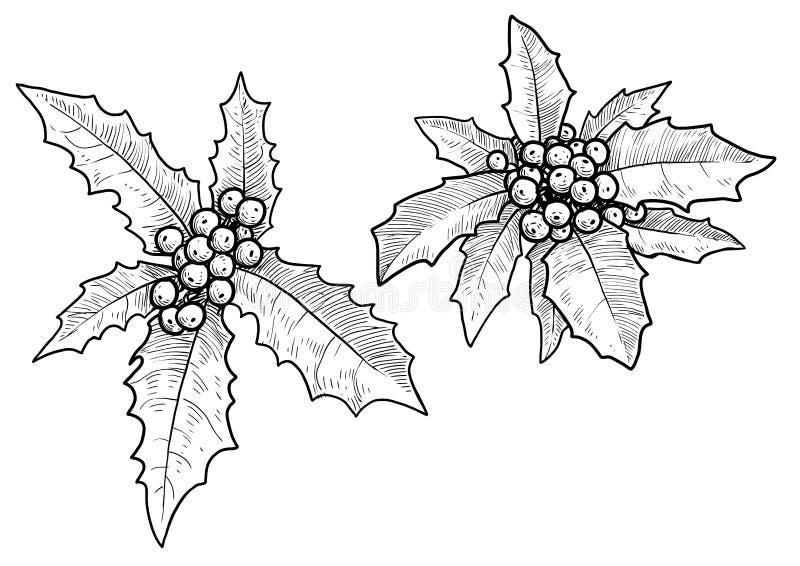 De illustratie van de hulstbes, tekening, gravure, inkt, lijnkunst, vector royalty-vrije illustratie