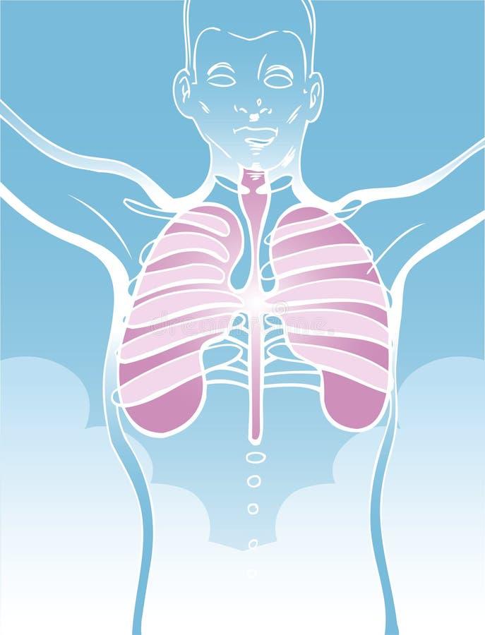 De Illustratie van longen vector illustratie