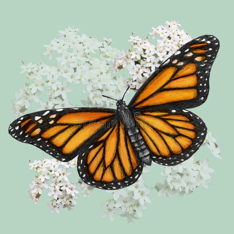 De illustratie van de monarchvlinder in pen met digitale kleur wordt getrokken die royalty-vrije illustratie