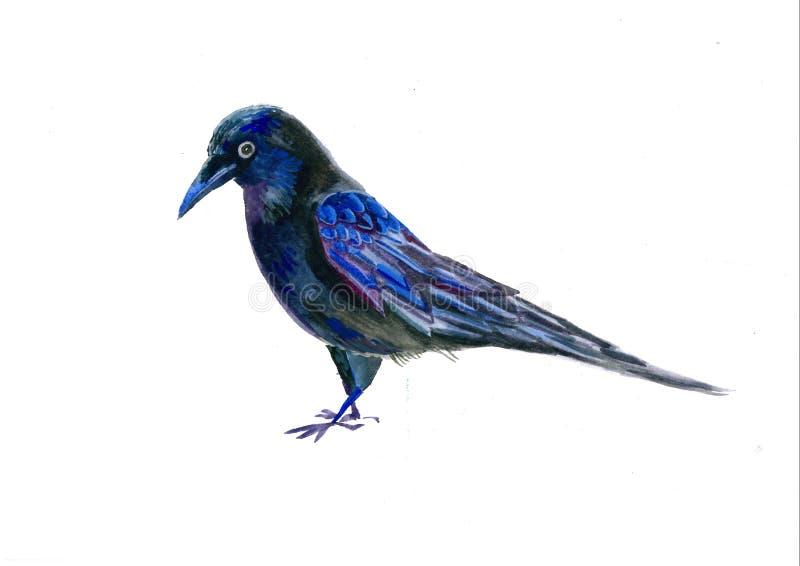 De illustratie van de raafwaterverf Vliegende zwarte die raaf op witte achtergrond wordt ge?soleerd stock foto's