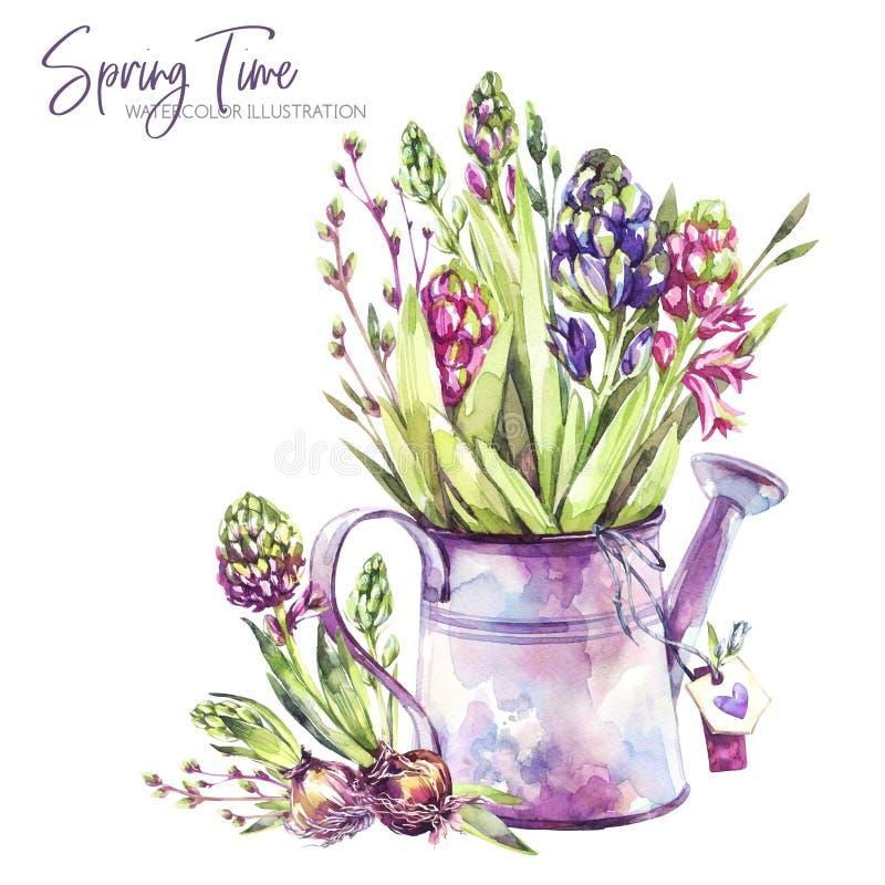 De illustratie van de waterverf Gieter met hyacintzaailingen en markeringen Rustieke voorwerpen De lenteinzameling in viooltje vector illustratie