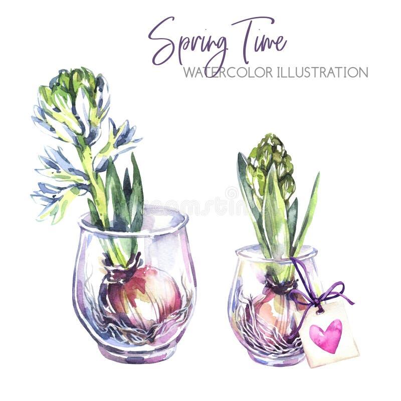 De illustratie van de waterverf Glasvazen met hyacintzaailingen Rustieke voorwerpen en huisdecor De lenteinzameling in viooltje vector illustratie