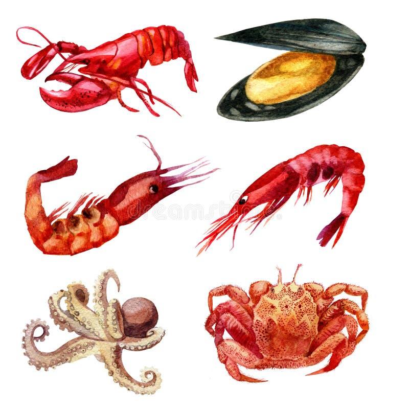 De illustratie van de waterverf Reeks van zeevruchten Garnalen, mossel, kanker, zeekreeft, pijlinktvis stock illustratie