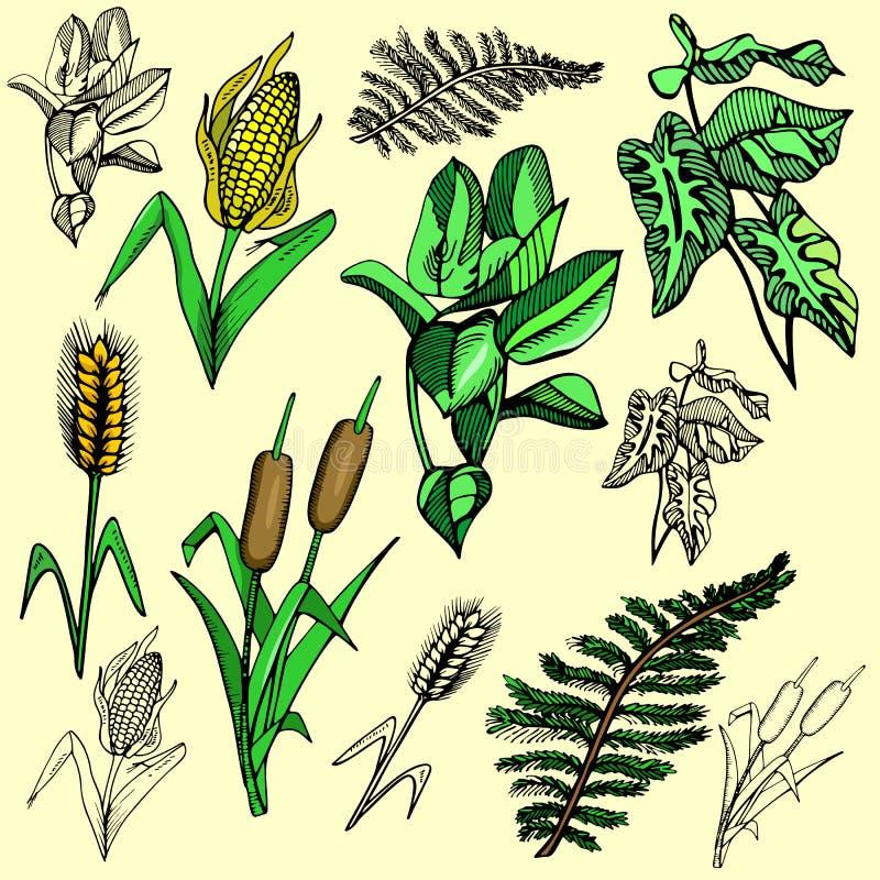 De illustratiereeks van de bloem royalty-vrije illustratie