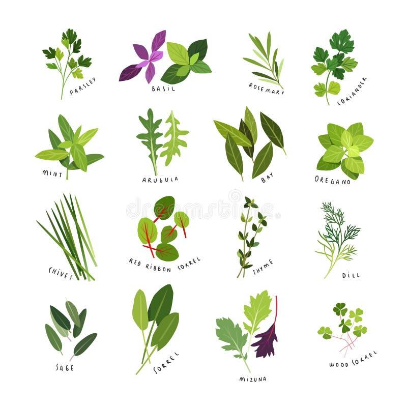 De illustraties van de klemkunst van kruiden en kruiden vector illustratie