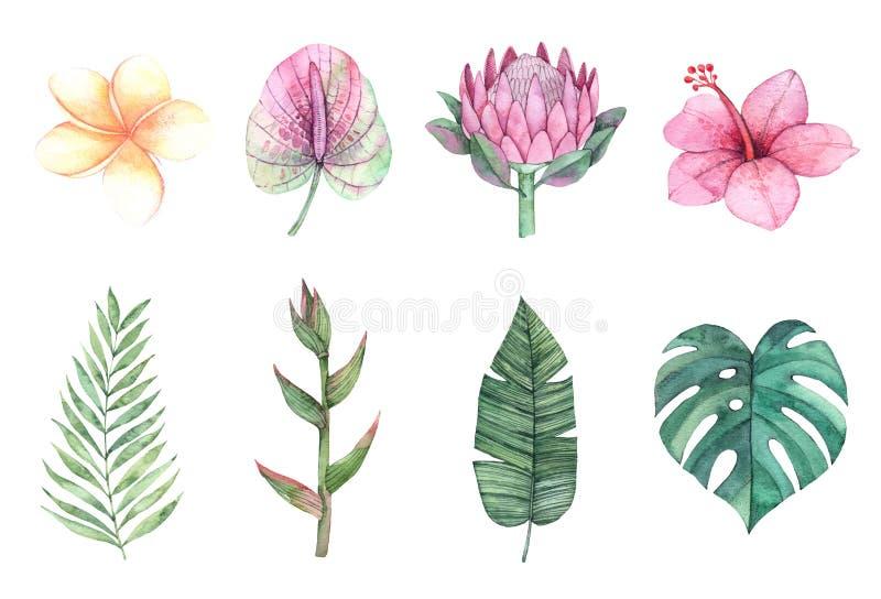 De illustraties van de waterverf Groene palmbladen en tropische bloemen stock illustratie