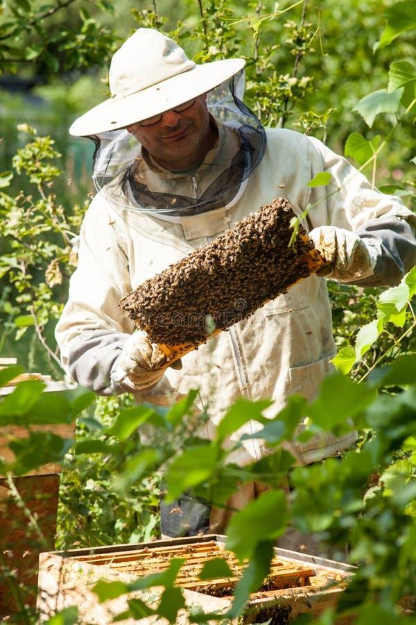 De imker bekijkt de bijenkorf Honingsinzameling en bijencontrole stock fotografie