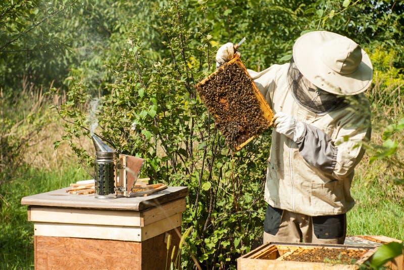 De imker bekijkt de bijenkorf Honingsinzameling en bijencontrole royalty-vrije stock foto's