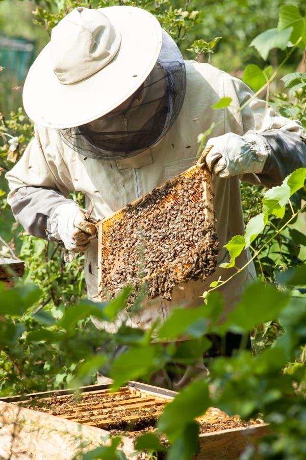 De imker bekijkt de bijenkorf Honingsinzameling en bijencontrole stock foto