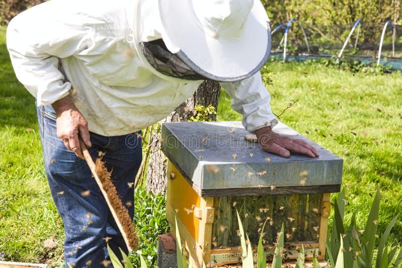 De imker die de bij aan de bijenkorf bekijken Zorg van bijen in de bijenstal stock afbeeldingen