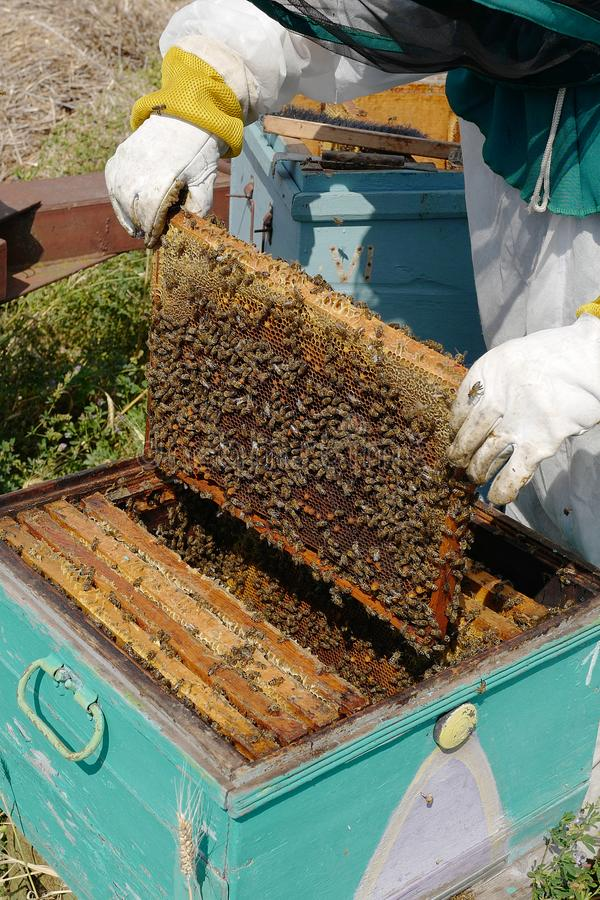 De imker neemt een kader met honing stock afbeeldingen