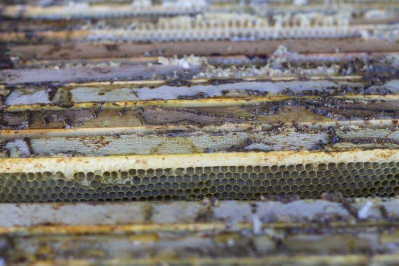 De imker opent de bijenkorf, de bijencontroles, controleshoning royalty-vrije stock afbeeldingen