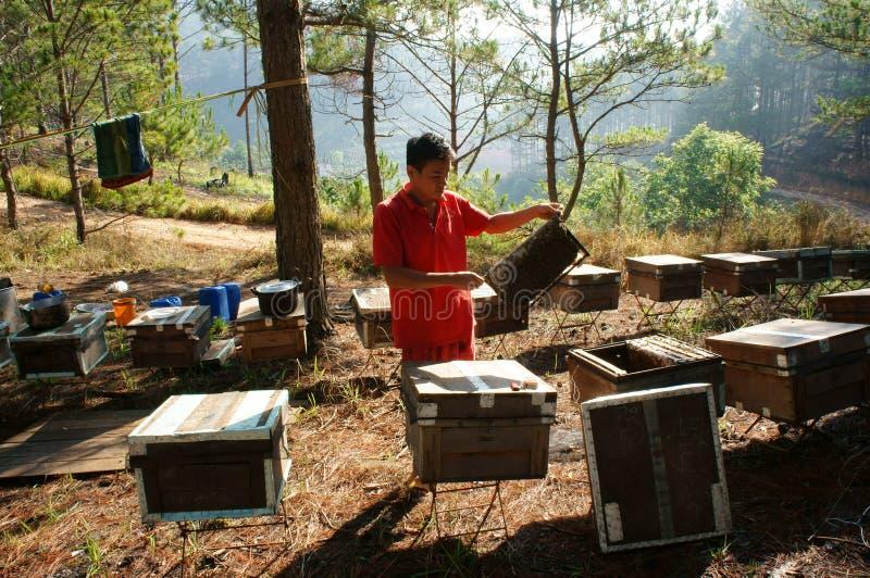 De imkerij van Azië, Vietnamese imker, bijenkorf stock afbeelding