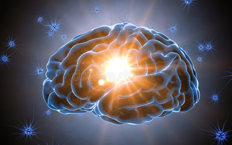 De impulsen van hersenen Neuronensysteem Menselijke anatomie het overbrengen van impulsen en het produceren van informatie royalty-vrije illustratie