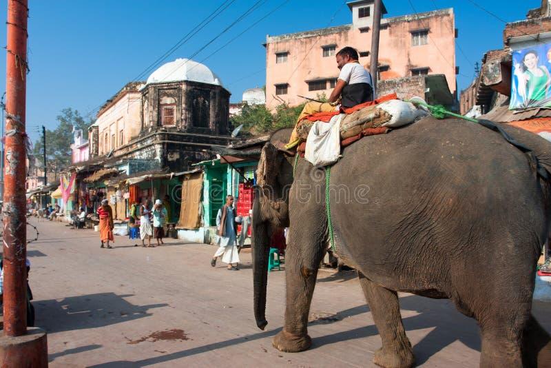 De Indische olifant gaat door de oude stad stock foto