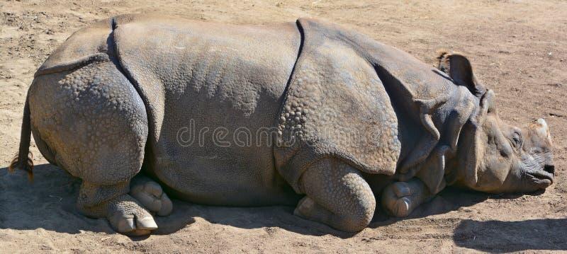 De Indische rinoceros stock afbeelding