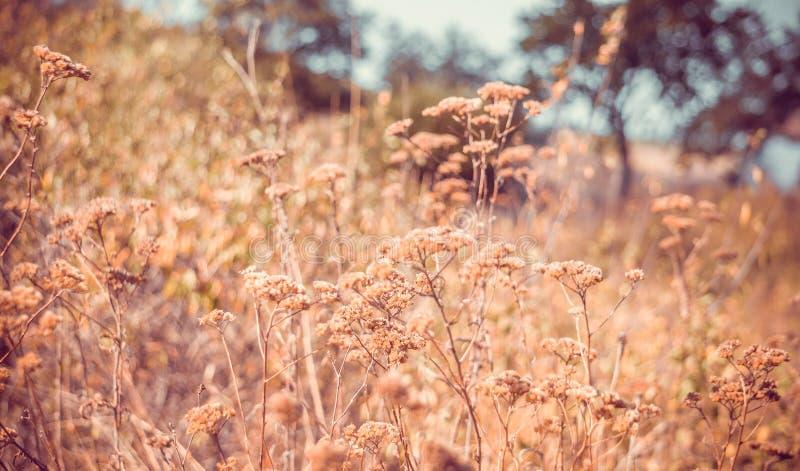 De Indische zomer Mooie de herfstweide stock afbeeldingen
