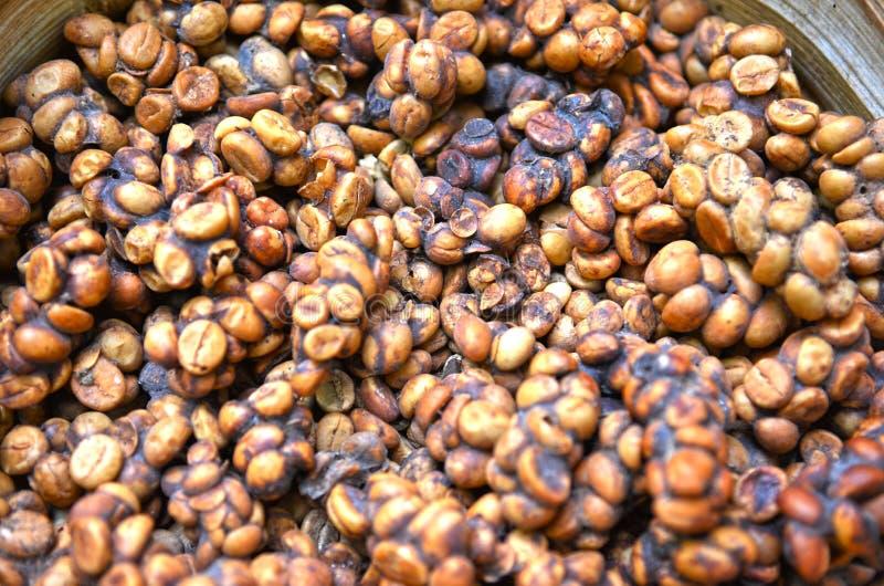 De Indonesische boon van de luwakkoffie royalty-vrije stock foto
