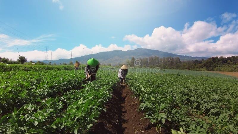 De Indonesische landbouwers oogsten in hoogland plantaardig gebied royalty-vrije stock foto's