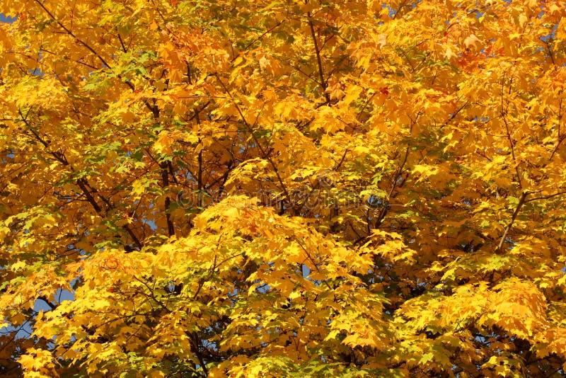 De indruk van de herfst royalty-vrije stock foto