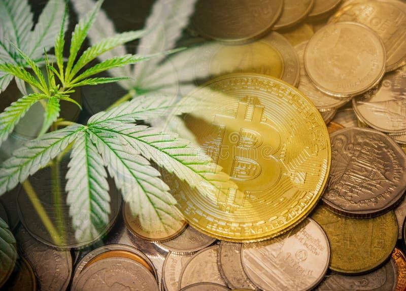 De de industrietendens cannabis van de bedrijfsmarihuanamarkt kweekt snel de hogere concept/Cannabisbladgroei stock afbeelding