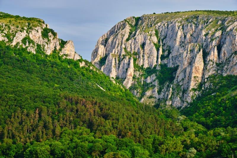 De ingang van Cheile Turzii van de Turdakloof met massieve, lange, rotsmuren, vroeg in de ochtend, met zonsopgang licht en groen  stock afbeelding