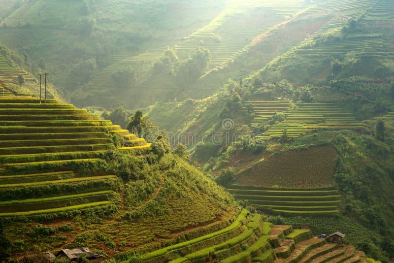 de ingediende elektriciteit van de Rijst van Vietnam terreaced royalty-vrije stock afbeeldingen
