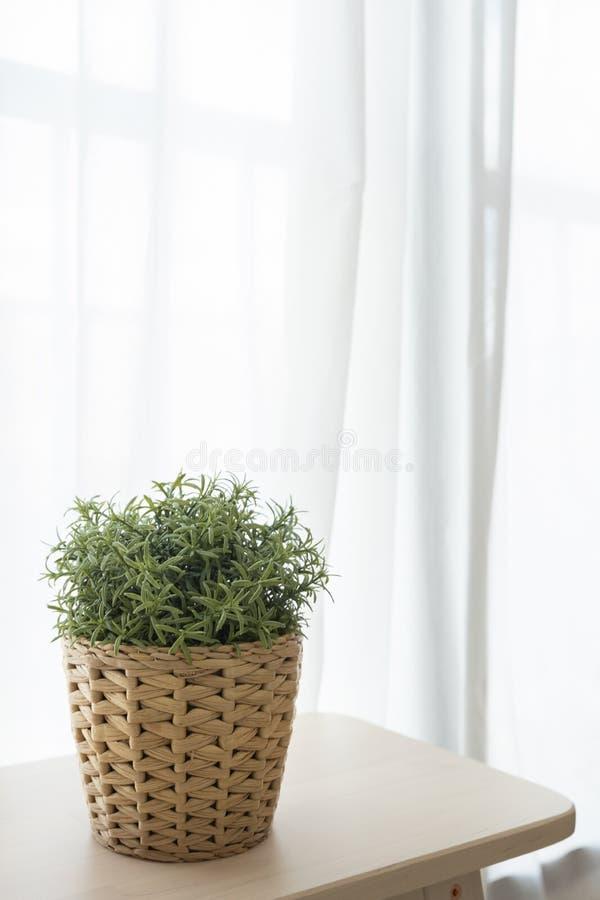 De ingemaakte installatie van het rotanweefsel op houten bruine stoel met witte transparante gordijn en vensterachtergrond royalty-vrije stock fotografie