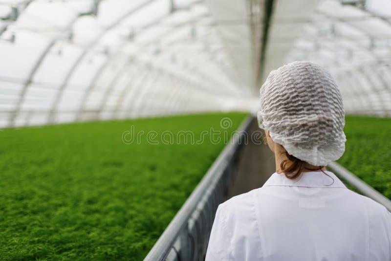 De ingenieur van de biotechnologievrouw met een klembord en royalty-vrije stock afbeelding