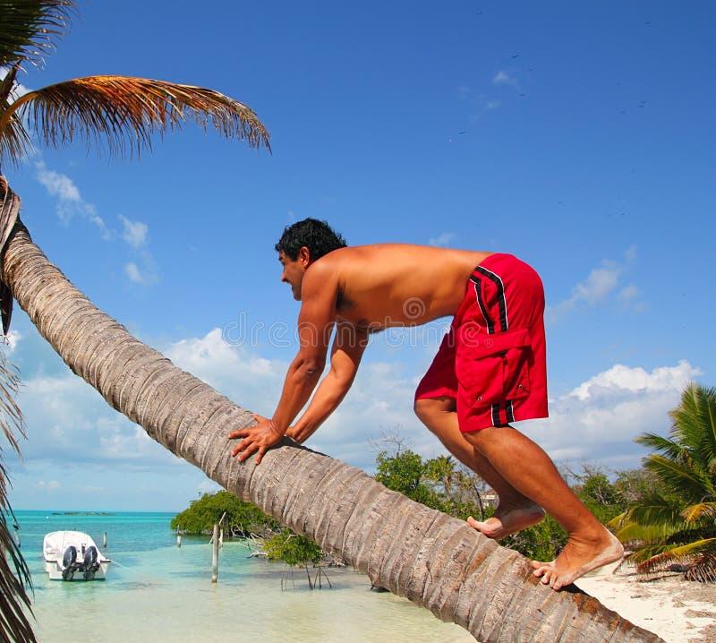 De inheemse Indische het beklimmen boomstam van de kokosnotenpalm stock foto
