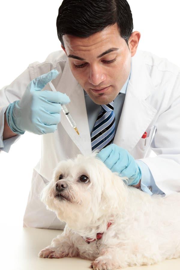De injectie van de dierenarts aan scruff van de hond van hals stock afbeeldingen