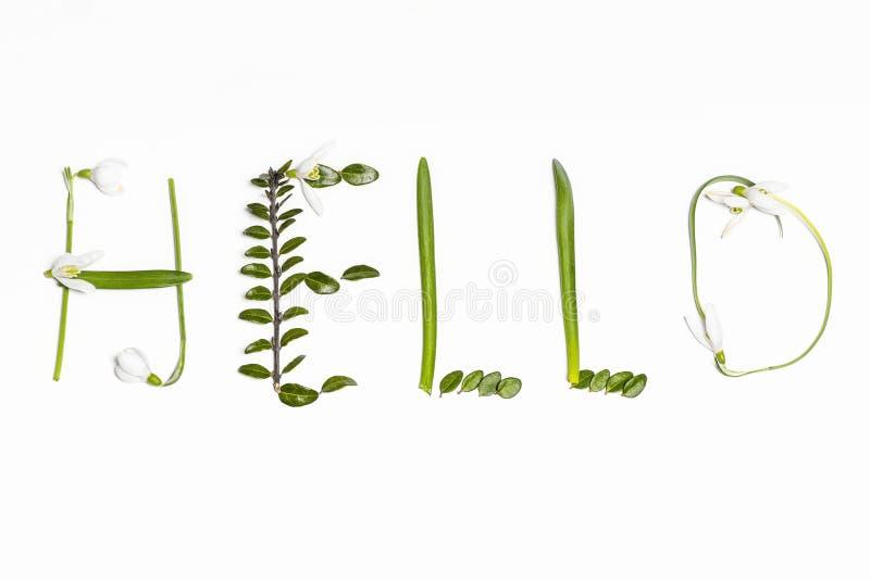 De inschrijving van verse groene bladeren op een witte achtergrond Hello De groetenlente prentbriefkaar Selectieve nadruk stock afbeeldingen