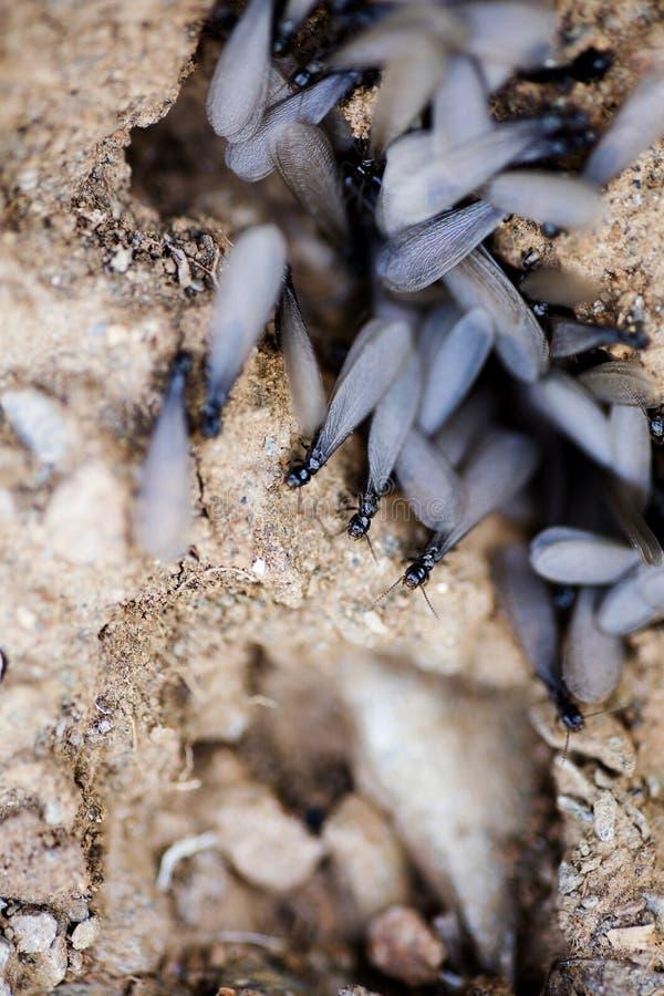 De insecten met grote vleugels op grond macroachtergrond zuiveren kunst in hoogte - producten 50,6 van kwaliteitsdrukken Megapixe royalty-vrije stock fotografie