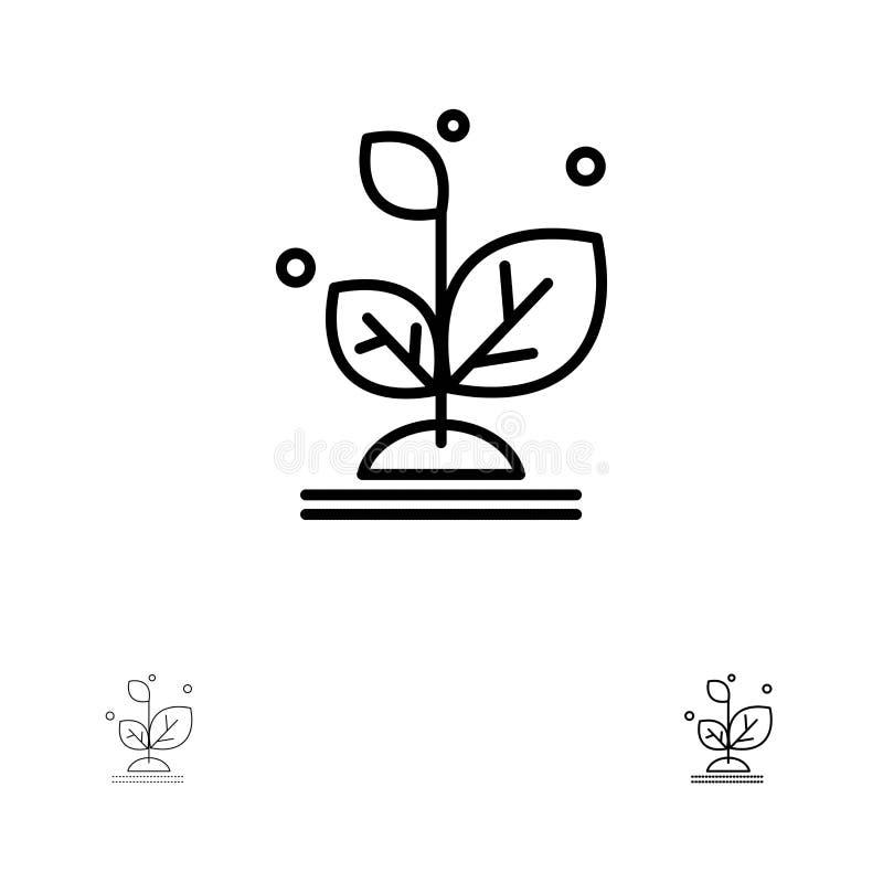 De installatie, groeit, de Groei, het pictogramreeks van de Succes Gewaagde en dunne zwarte lijn stock illustratie