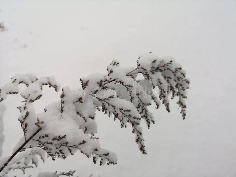 De installatie met sneeuw wordt behandeld door sneeuw stock foto
