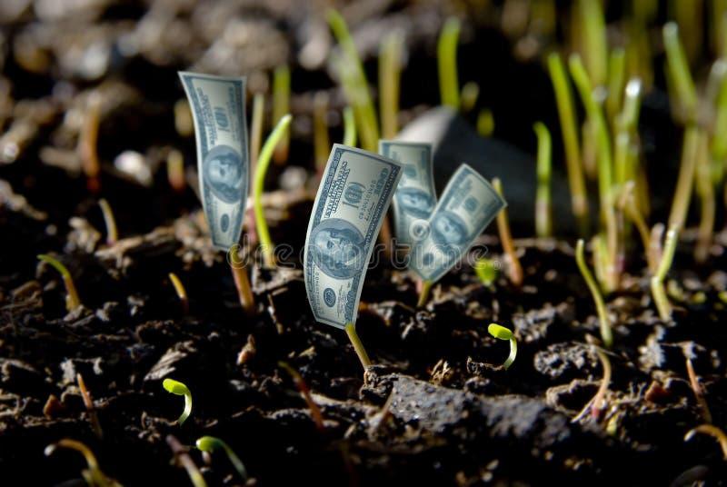 De installatie van de dollar stock fotografie