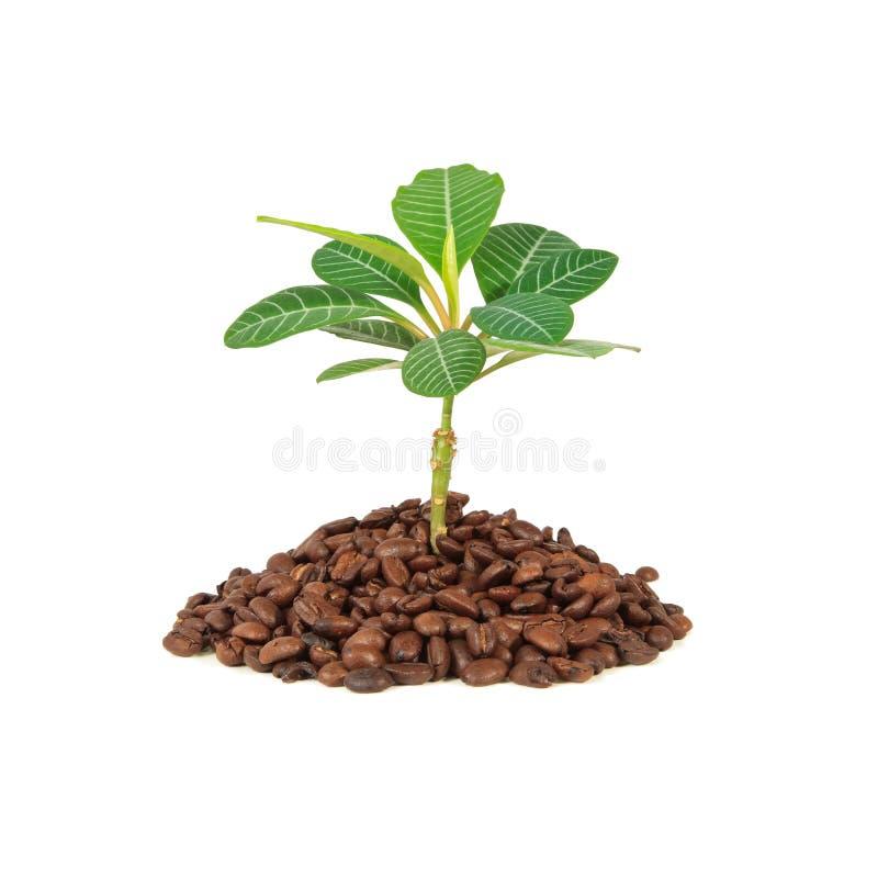 De Installatie van de koffie stock afbeeldingen