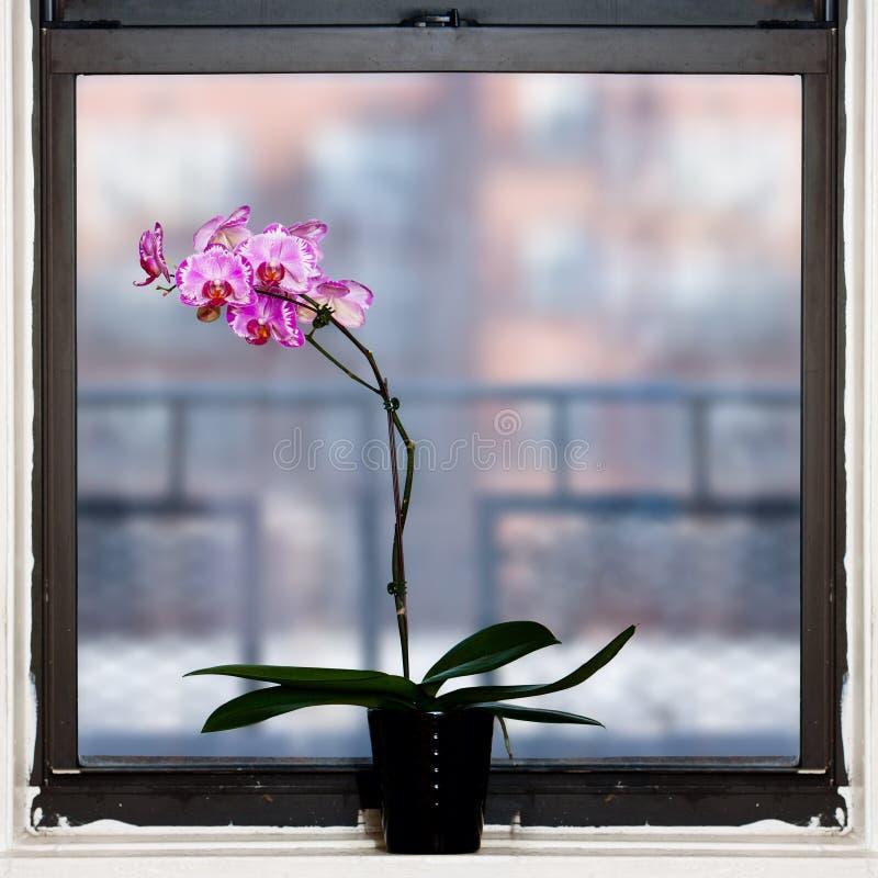 De installatie van de orchidee door venster royalty-vrije stock foto