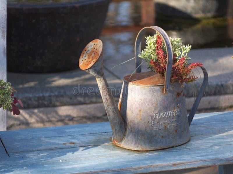 De installatie van de pot en van het Gebladerte stock afbeeldingen