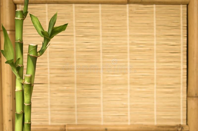 De installatie van het achtergrondreeksbamboe stock foto