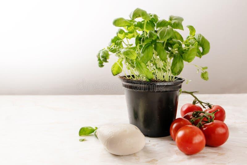 De installatie van het basilicumkruid in een pot, verse tomaten en een mozarella op een Li royalty-vrije stock fotografie