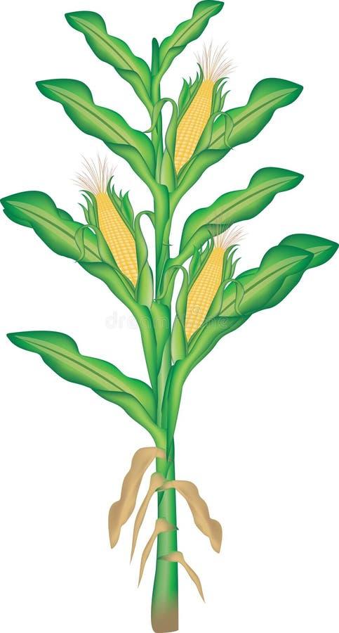 De installatie van het graan vector illustratie