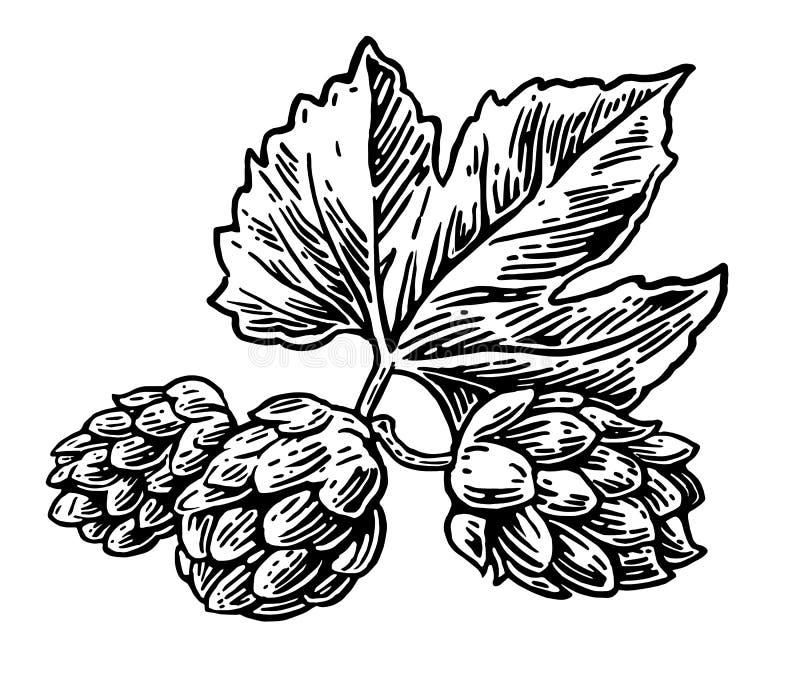 De installatie van het hopkruid die in de brouwerij van bier wordt gebruikt Voor etiketten en verpakkend bier Vector gegraveerde  stock illustratie