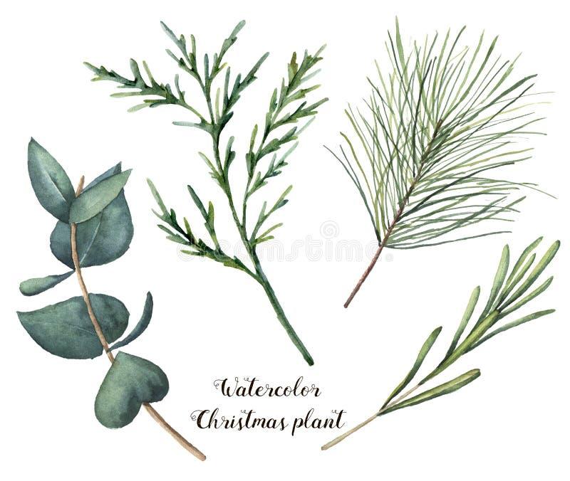 De installatie van waterverfkerstmis De hand schilderde rozemarijn, eucalyptus, ceder en spartakken op witte achtergrond worden g vector illustratie