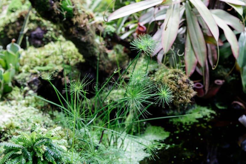 De installaties eten insecten die door dieren te eten om de bomen door middel van het bedriegen van insecten te voeden in het ops stock foto's